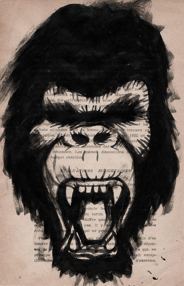 Gorille, Saïssi