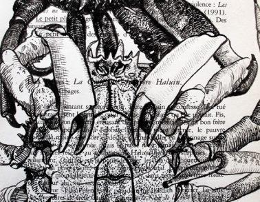 Araignées de mer, encre de chine sur page de livre, 2014 -- Collection particulière