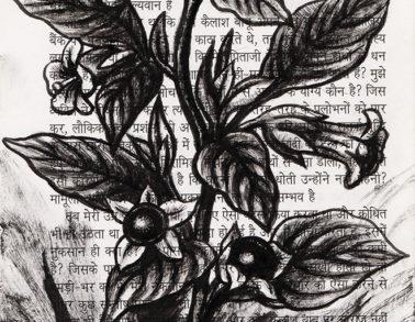 Belladone, encre de chine sur page de livre, 2018 -- Collection particulière