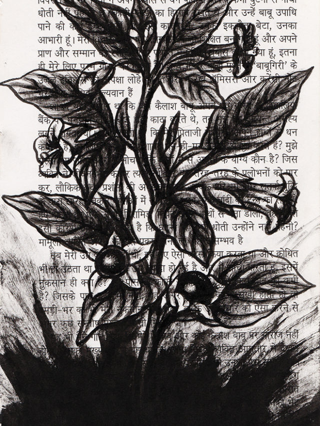 Belladone, encre de chine sur page Hindi, 2018